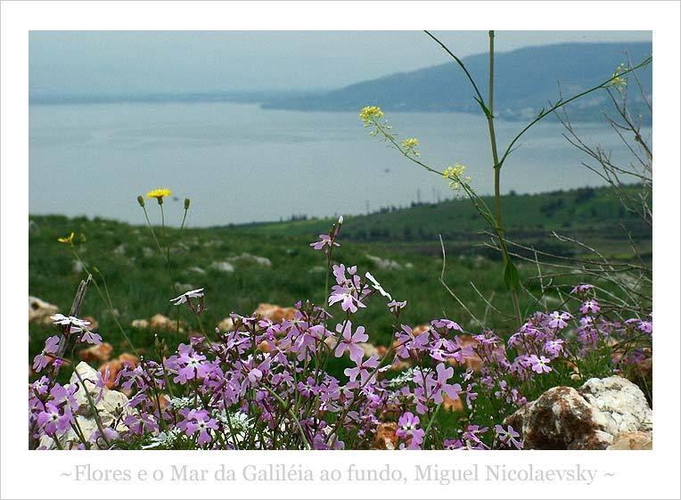 Nicolaevsky - Flores e o mar da galileia ao fundo