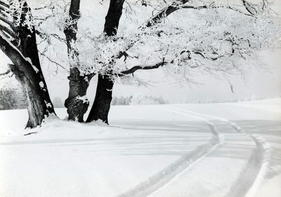 snow tracks 2, por ashen venema, http://courseofmirrors.wordpress.com/